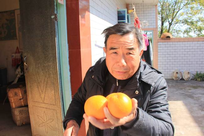 Deng Daqing shows CRI reporter the freshly picked oranges on December 20, 2017. [Photo: China Plus/ Li Shiyu]