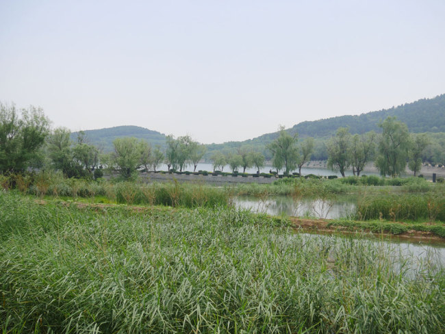 The photo shows a wetland park near the Yanshan Petrochemical Company in suburban Beijing, May 25, 2018. [Photo: China Plus/Luo Dan]