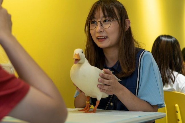 This photo taken on August 29, 2019 shows a customer, posing for photos with a duck at Hey! Wego duck cafe in Chengdu in China's southwestern Sichuan province. [Photo: AFP/Pak YIU]