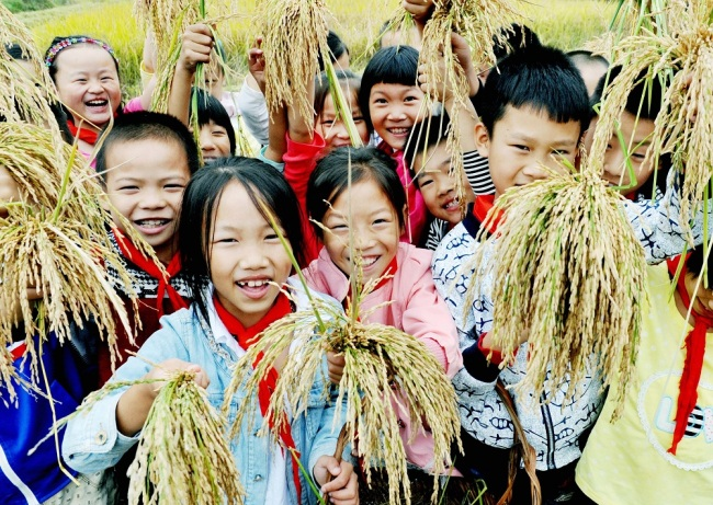 A group of primary school students in east China's Jiangxi Province display the rice ears they picked in a field ahead of World Food Day, which falls on October 16 every year. [Photo: IC]